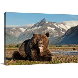 Large Gallery-Wrapped Canvas Wall Art Print 30 x 20 entitled Grizzly Bear, Katmai National Park, Alaska