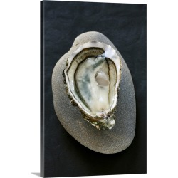 Large Solid-Faced Canvas Print Wall Art Print 20 x 30 entitled Oyster