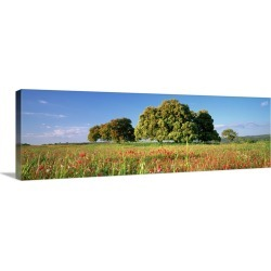 Large Gallery-Wrapped Canvas Wall Art Print 36 x 12 entitled Flowers in a field, Andalusia, Spain