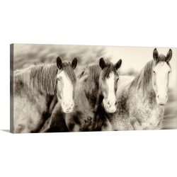 Large Gallery-Wrapped Canvas Wall Art Print 30 x 15 entitled Three Amigos II found on Bargain Bro Philippines from Great Big Canvas - Dynamic for $169.99