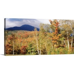 Large Gallery-Wrapped Canvas Wall Art Print 30 x 14 entitled Trees on a field in front of a mountain, Mount Washington, Wh... found on Bargain Bro India from Great Big Canvas - Dynamic for $179.99