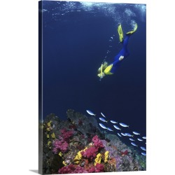 Large Solid-Faced Canvas Print Wall Art Print 20 x 30 entitled Snorkelers swimming with fusilier fish found on Bargain Bro India from Great Big Canvas - Dynamic for $169.99