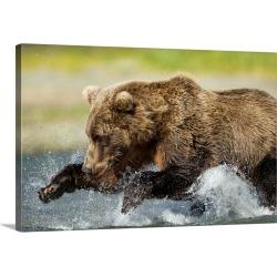 Large Gallery-Wrapped Canvas Wall Art Print 30 x 20 entitled Brown Bear Fishing, Katmai National Park, Alaska