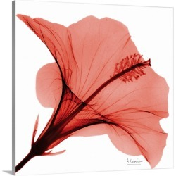Large Solid-Faced Canvas Print Wall Art Print 20 x 20 entitled Red Hibiscus x-ray photography