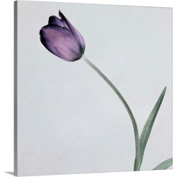 Large Gallery-Wrapped Canvas Wall Art Print 16 x 16 entitled Tulip II found on Bargain Bro India from Great Big Canvas - Dynamic for $164.99