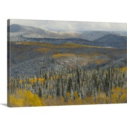 Large Gallery-Wrapped Canvas Wall Art Print 30 x 20 entitled Evergreens and Aspens, Fall Snow storm near Encampment, Wyoming found on Bargain Bro Philippines from Great Big Canvas - Dynamic for $209.99