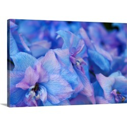 Large Solid-Faced Canvas Print Wall Art Print 30 x 20 entitled Close up of Hydrangea flowers, Sequim, Washington
