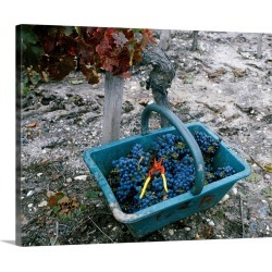Large Solid-Faced Canvas Print Wall Art Print 30 x 24 entitled A basket full of grapes in a vineyard