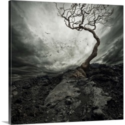Large Solid-Faced Canvas Print Wall Art Print 20 x 20 entitled Dramatic Sky Over Old Lonely Tree