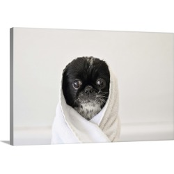 Large Gallery-Wrapped Canvas Wall Art Print 24 x 16 entitled Cute dog wrapped in a towel