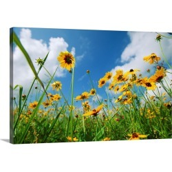 Large Gallery-Wrapped Canvas Wall Art Print 24 x 16 entitled A skyward view of coreopsis flowers in a Texas field