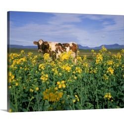Large Gallery-Wrapped Canvas Wall Art Print 24 x 19 entitled Cow in a field, Iceland