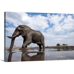 Large Solid-Faced Canvas Print Wall Art Print 30 x 20 entitled Bull Elephant, Chobe National Park, Botswana