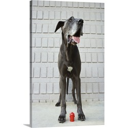 Large Gallery-Wrapped Canvas Wall Art Print 16 x 24 entitled Great Dane with miniature fire hydrant