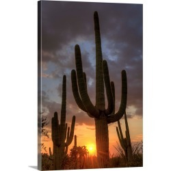 Large Gallery-Wrapped Canvas Wall Art Print 16 x 24 entitled Arizona, Tucson, Saguaro National Park found on Bargain Bro India from Great Big Canvas - Dynamic for $214.99