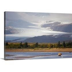 Large Gallery-Wrapped Canvas Wall Art Print 30 x 20 entitled Young Grizzly fishing at Hallo Bay, Katmai National Park, Alaska