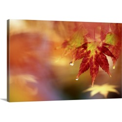 Large Gallery-Wrapped Canvas Wall Art Print 24 x 16 entitled A maple leaf with rain drops