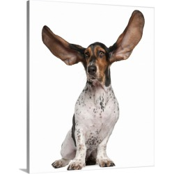 Large Solid-Faced Canvas Print Wall Art Print 24 x 30 entitled Basset Artesien Normand with its ears in the air found on Bargain Bro India from Great Big Canvas - Dynamic for $189.99
