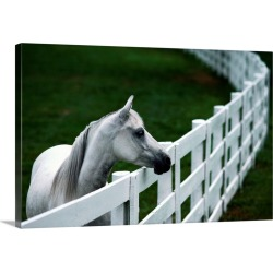 Large Solid-Faced Canvas Print Wall Art Print 30 x 20 entitled A horse standing next to a white fence, Kentucky