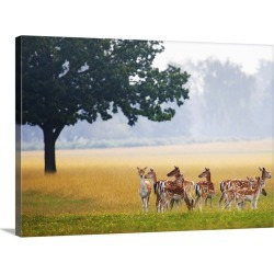 Large Gallery-Wrapped Canvas Wall Art Print 30 x 22 entitled Fallow deer, Dama dama, gather together in a field in summer