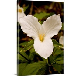 Large Gallery-Wrapped Canvas Wall Art Print 16 x 24 entitled The Trillium Flower, the official flower of the province of O...
