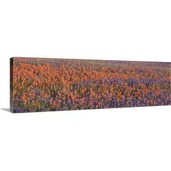 Large Gallery-Wrapped Canvas Wall Art Print 30 x 10 entitled Texas Bluebonnets and Indian Paintbrushes in a field, Texas