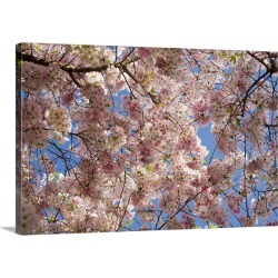 Large Gallery-Wrapped Canvas Wall Art Print 24 x 16 entitled A tree full of blossoms