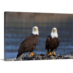 Large Gallery-Wrapped Canvas Wall Art Print 24 x 16 entitled Bald Eagles Perched On Barnacle Covered Rock Inside Passage, ... found on Bargain Bro India from Great Big Canvas - Dynamic for $214.99