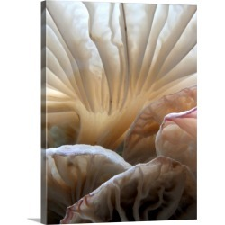Large Solid-Faced Canvas Print Wall Art Print 18 x 24 entitled Close Up of Wild Mushrooms
