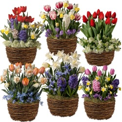 Six Months of Flower Bulb Gift Gardens found on Bargain Bro Philippines from Plow & Hearth for $199.95