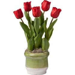 Merry Christmas Tulip Bulb Garden Gift found on Bargain Bro Philippines from Plow & Hearth for $24.95