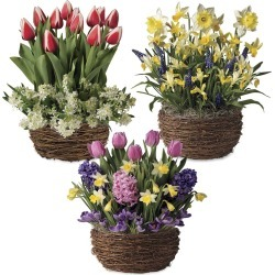 Three Months of Spring Flower Bulb Gift Gardens found on Bargain Bro Philippines from Plow & Hearth for $99.95