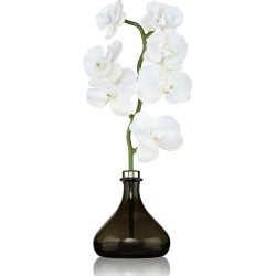 Senti - Orchid Flower Diffuser - 250ml - Bergamot & Ginger found on Bargain Bro India from Amara US for $204.00