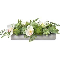 Echeveria and Orchids in Cement Planter found on Bargain Bro Philippines from Bergdorf Goodman for $430.00