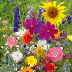 Fairytale Flower Seed Mix, Mixed, Eden Brothers