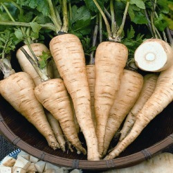 Parsnip Seeds - All-American, Vegetable Seeds, Eden Brothers