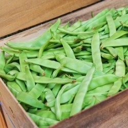 Bean Seeds (Bush) - Romano, Vegetable Seeds, Eden Brothers