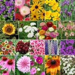 Late Bloomer - Fall Blooming Wildflower Seed Mix - 5 Pounds, Bulk, Mixed, Eden Brothers