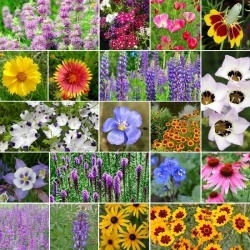 North American Native Wildflower Seed Mix - 5 Pounds, Bulk, Mixed, Eden Brothers