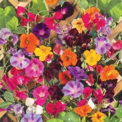 Colorful Climbers - Climbing Flower Seed Mix, Mixed, Eden Brothers