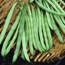 Bean Seeds (Bush) - Bountiful, Vegetable Seeds, Eden Brothers