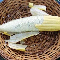Gourd Seeds - Luffa, Vegetable Seeds, Eden Brothers