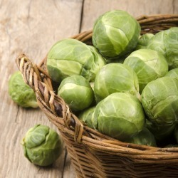 Brussels Sprouts Seeds - Catskill, Vegetable Seeds, Eden Brothers