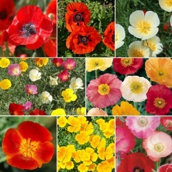 Poppy Power - Poppy Flower Seed Mix, Mixed, Eden Brothers