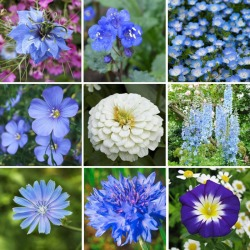 Blue Ribbon - Blue Flower Seed Mix, Mixed, Eden Brothers