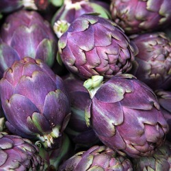 Artichoke Seeds - Purple Italian Globe, Vegetable Seeds, Eden Brothers found on Bargain Bro Philippines from Eden Brothers Seed Company for $4.50
