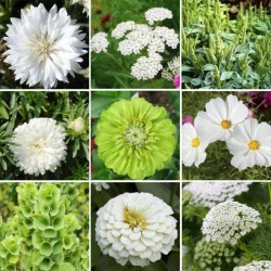 Green with Envy Flower Seed Mix, Green, Eden Brothers
