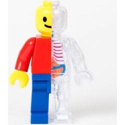 Brick Man Anatomy Model Kit