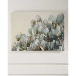 """Succulent 2"" Photograph Print on Maple Box Art"