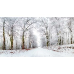 Winter Landscape Winter Road And Trees Covered With Snow Wallpaper Mural by Limitless Walls | Standard Canvas Fabric | Small 5�